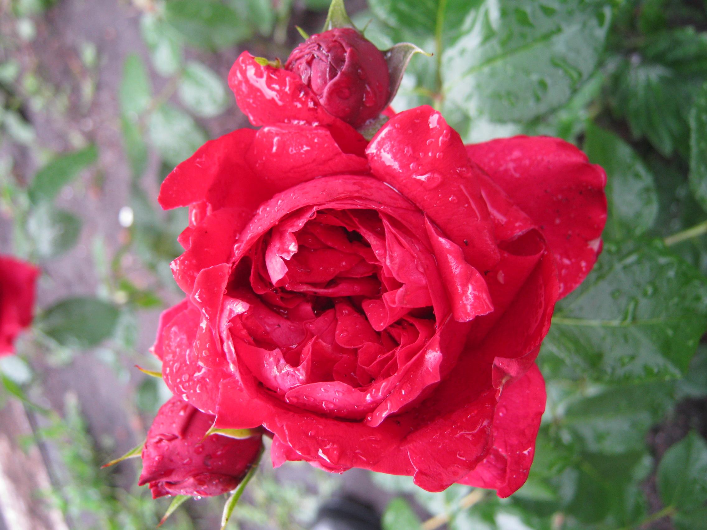 Эрика роуз фото 17 фотография